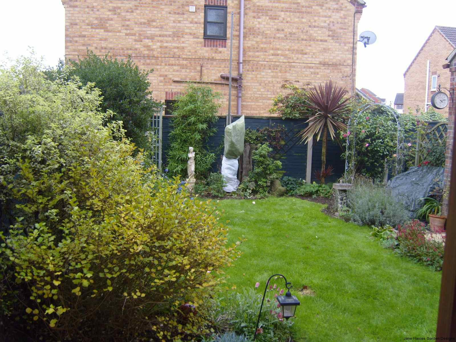 Existing garden showing overgrown shrubs