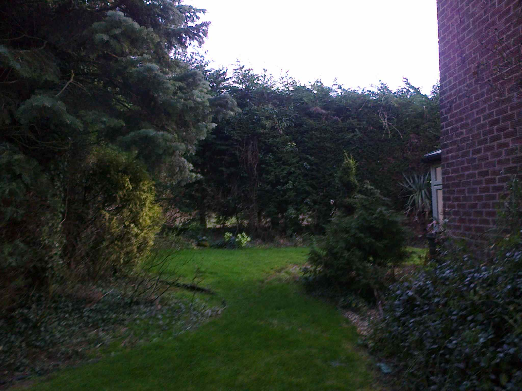 Backgarden_view to gazeboplot.jpg