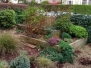 Shady Urban Front Garden