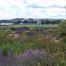 Thumbnail image for Yeo Valley gravel garden – a little-known gem
