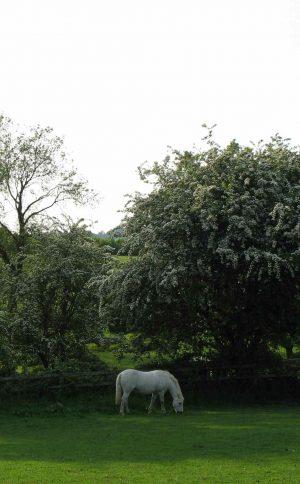 Erigeron and geranium