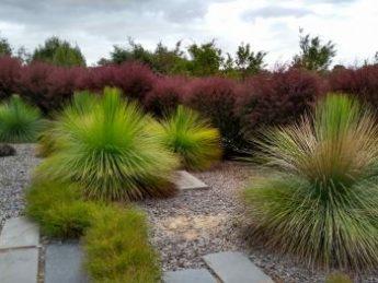 Thumbnail image for Vibrant Australian Garden
